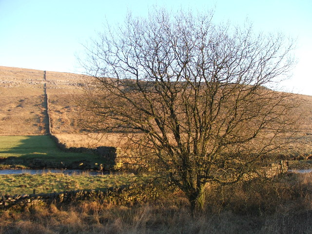 Tree in Kingsdale.