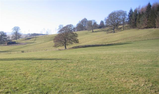 A lone oak tree.