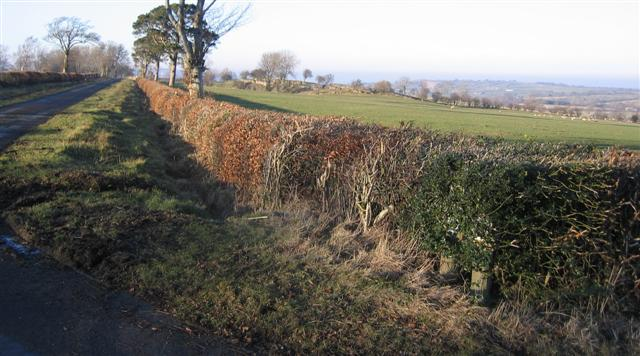 Allsorts Hedge.
