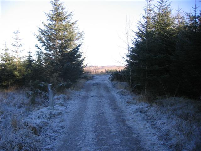 Millfield wood track.