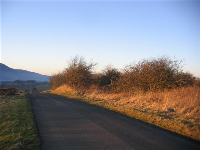 Hawthorn refuge for birds