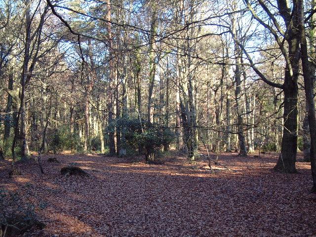 Bridewell Plantation