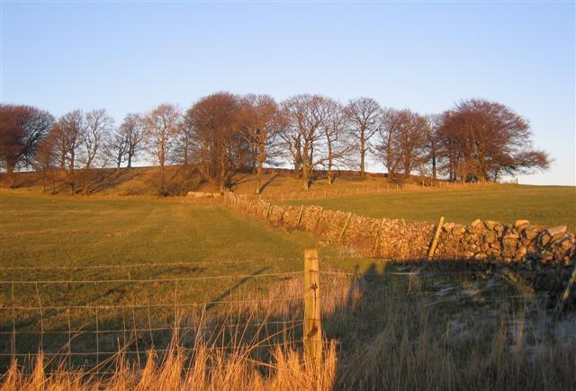Ancient Woodland Strip.