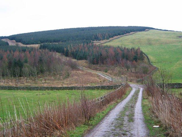 Ladhope Moor