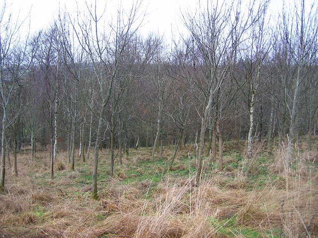 Gullet Wood:  Wooplaw Community Woodland.