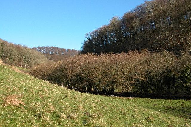 Famish Hill Plantation