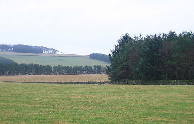Circular plantation, Threepwood.