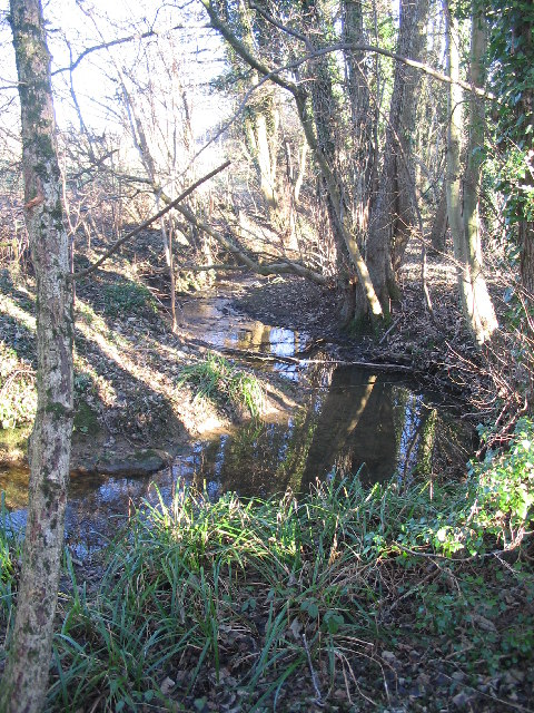 Tributary of the River Frome