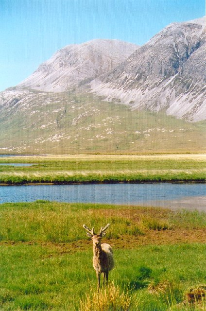 A red stag watches two walkers passing by on the way to Arkle [background]