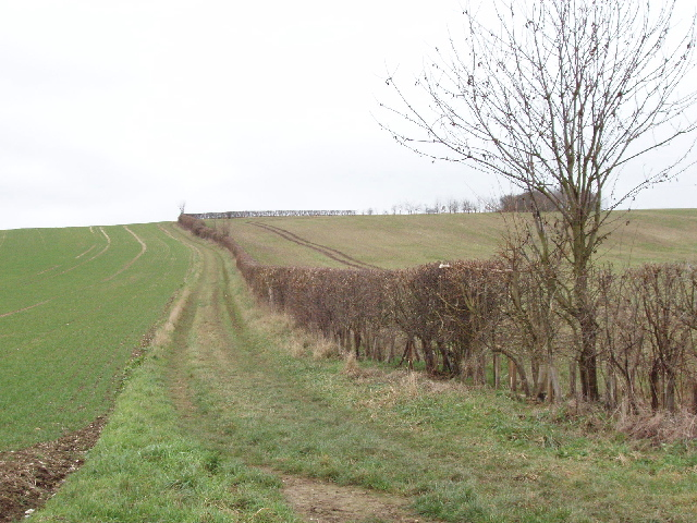 Track to Quarrendon Farm near Amersham, with winter wheat