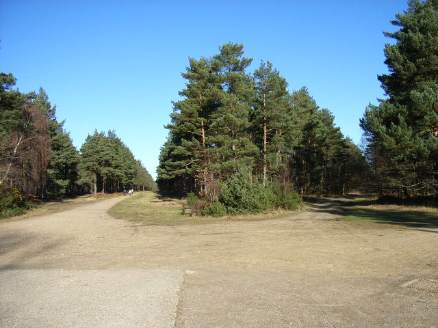 Lower Star Post, Swinley Forest
