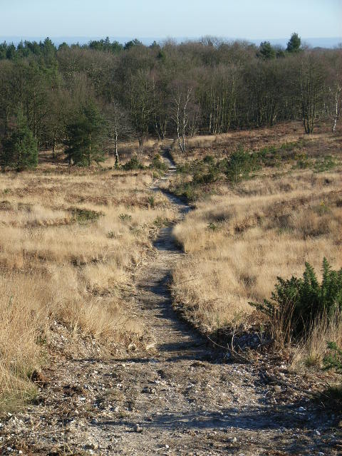 Footpath, Bagshot Heath