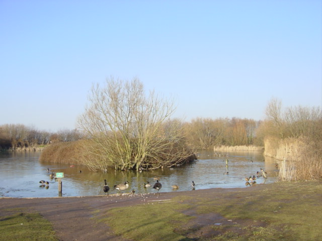 Pond, Gilroy Road Nature Reserve