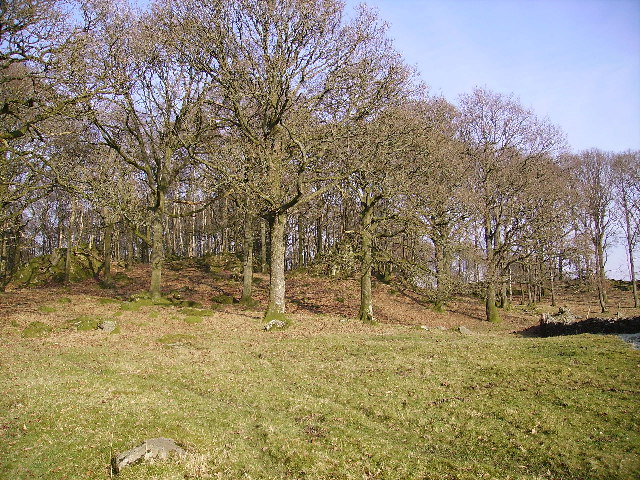 Cow Head Wood