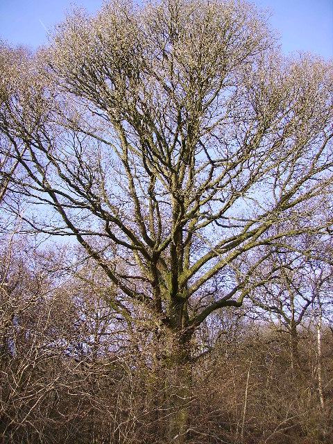Tree Winster Valley