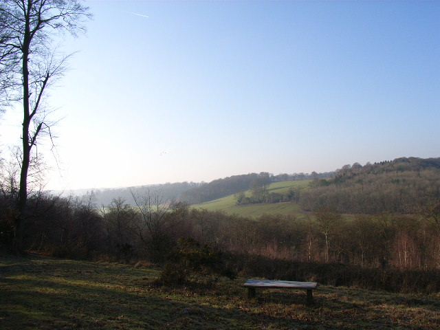 The top of Turville Park Woods