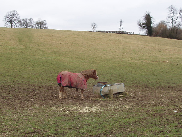 Horse in a field, Lower Bottom House Farm, Chalfont St Giles
