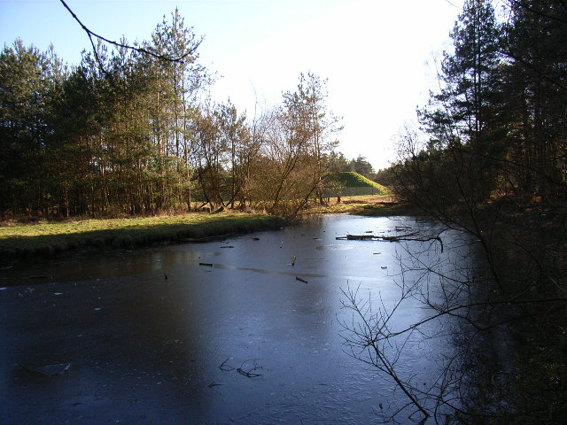 Frozen pond, Swinley Forest