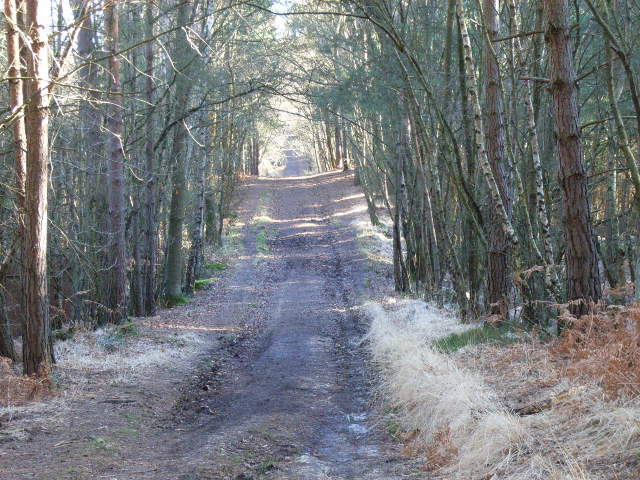 Vicarage Lane near Bagshot