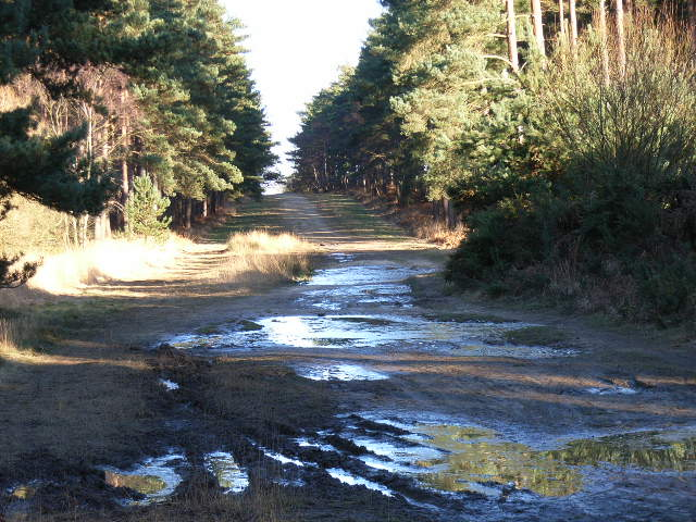 Lake Ride, Swinley Forest