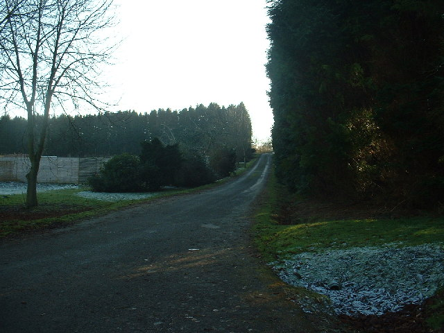 Road to the Forestry Offices