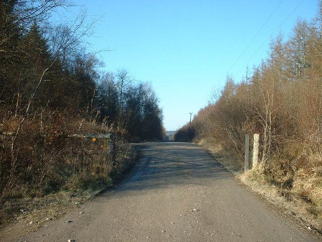 Forestry track, Clocaenog Forest