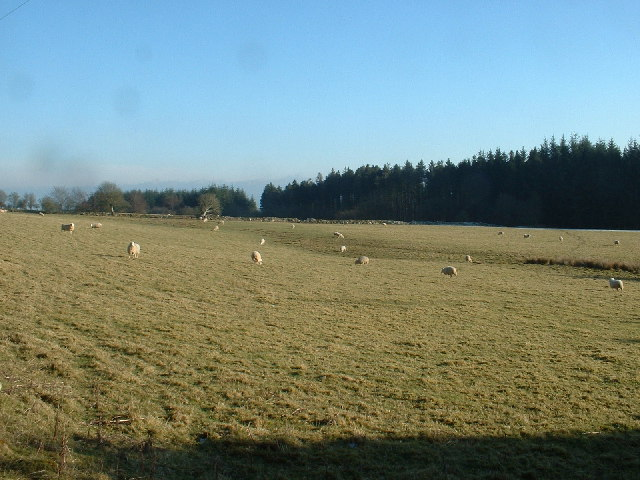 Farmland near Clocaenog Forest