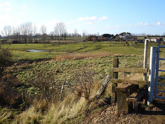 Frog Farm
