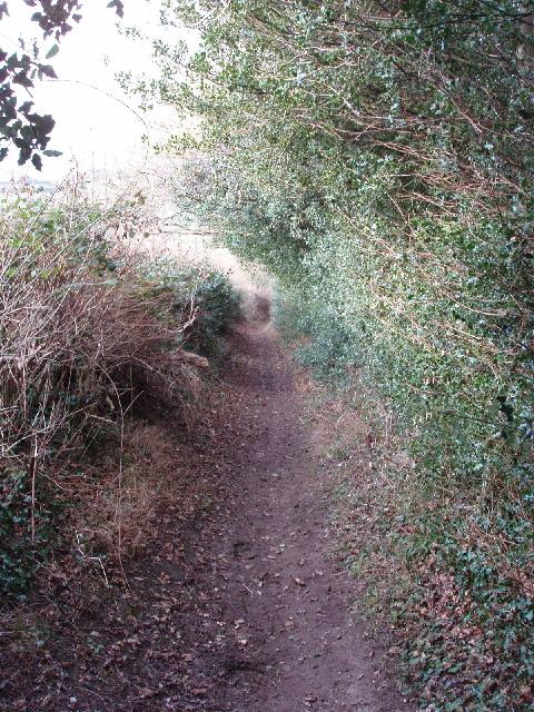 Bridleway with holly hedge, near Amersham