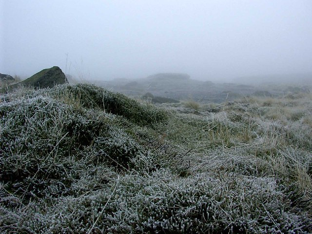Frost on the high moor.