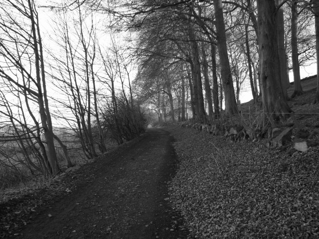 Path on Platt Hill