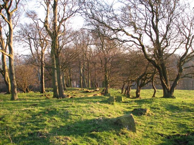 Platt Hill, trees
