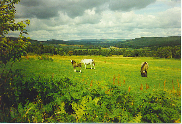 Horsieculture east of Potarch, Royal Deeside.