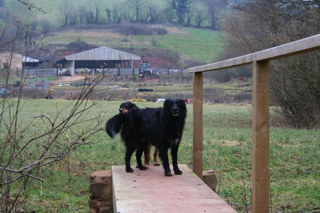 Tiverton: farm dogs near Rashleighayes