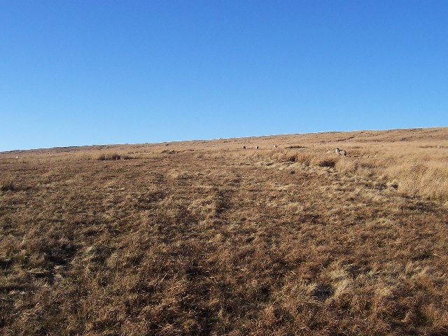Braidley Moor