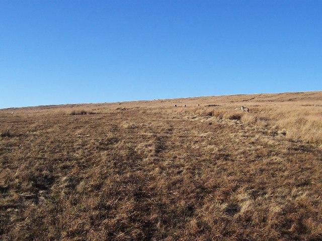 Braidley Moor