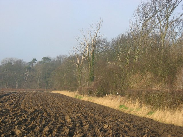 Woodland and ploughed field.