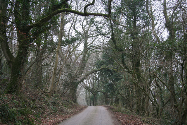 Hemyock: lane to Hackpen Hill