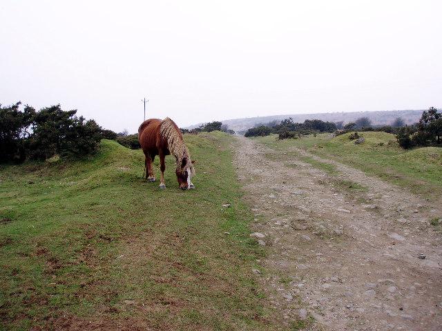 Moor pony at Tokenbury Corner