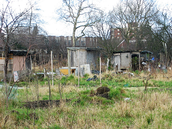 Allotments, Northfield Avenue W13
