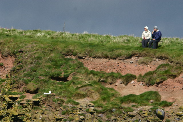 Bird watchers at Henry's Scorth