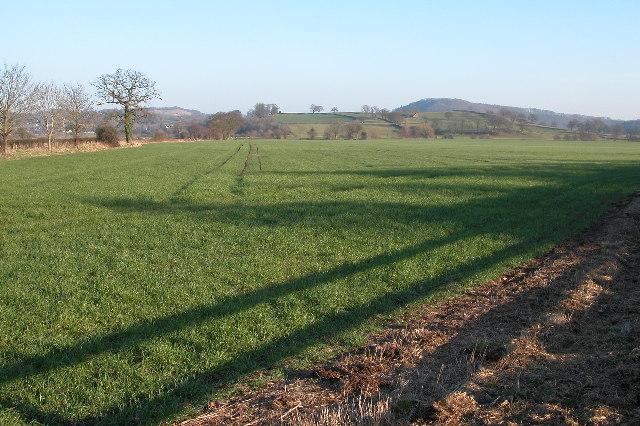 Meadowland near Holme Lacy