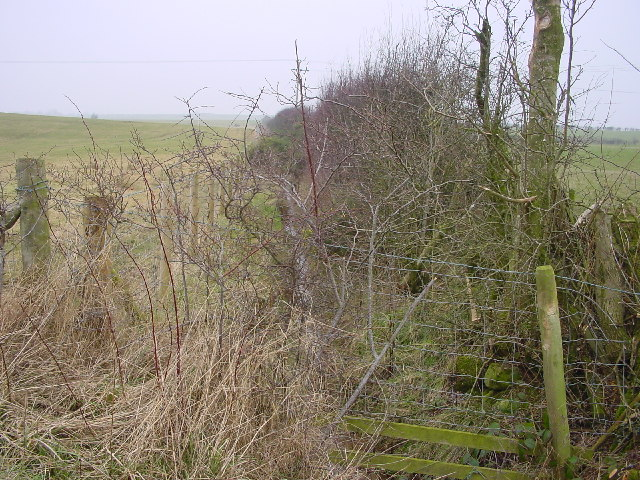 Overgrown Ditch
