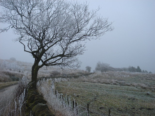 Frosty moorland pasture near Gilligants farm