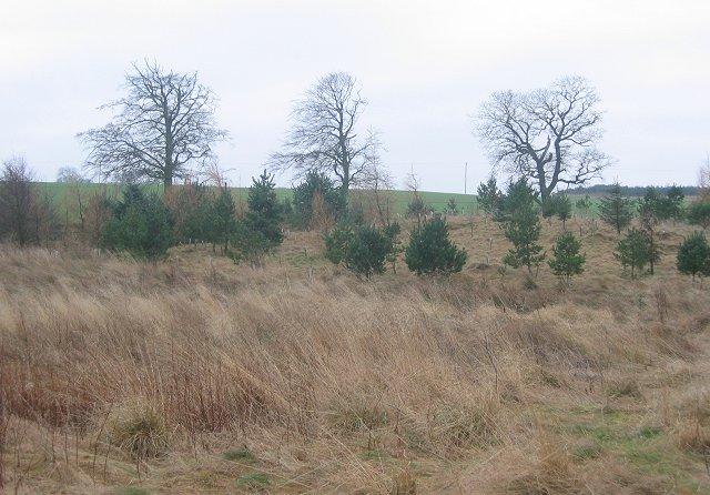 New woods,Greenknowe.