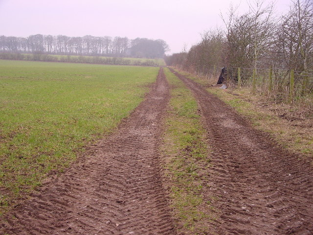 Farm Track to Spain Wood