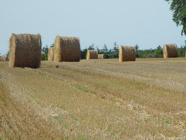 Bales in the field behind Garvock Street, Laurencekirk