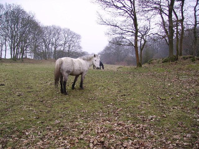 Ponies Seatle