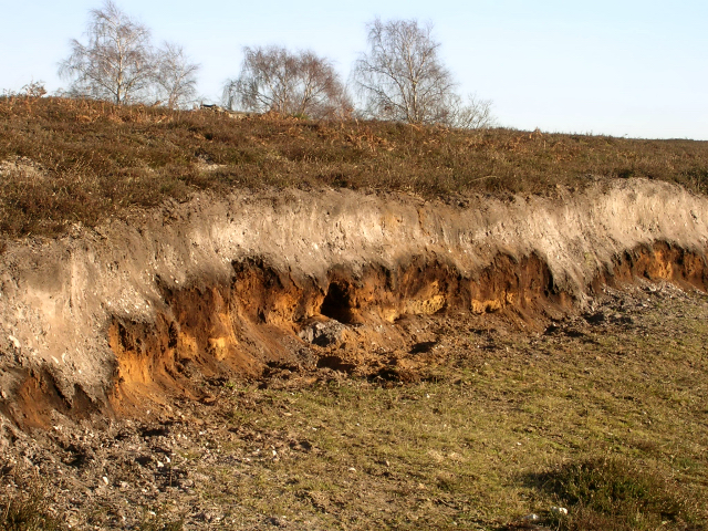 SU3308   Exposed soil profile on Matley Heath  New ForestForest Soil Profile