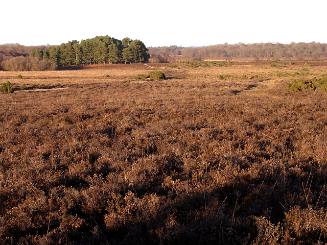 Matley Heath from Matley Ridge, New Forest